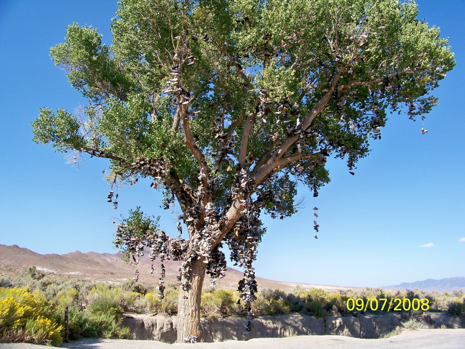 arbre-a-chaussures-nevada